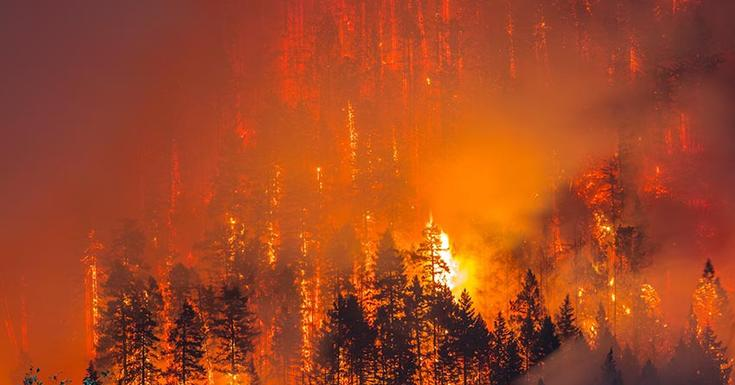 Mature forest on fire